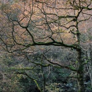 Padley Gorge Trees in Autumn, Peak District